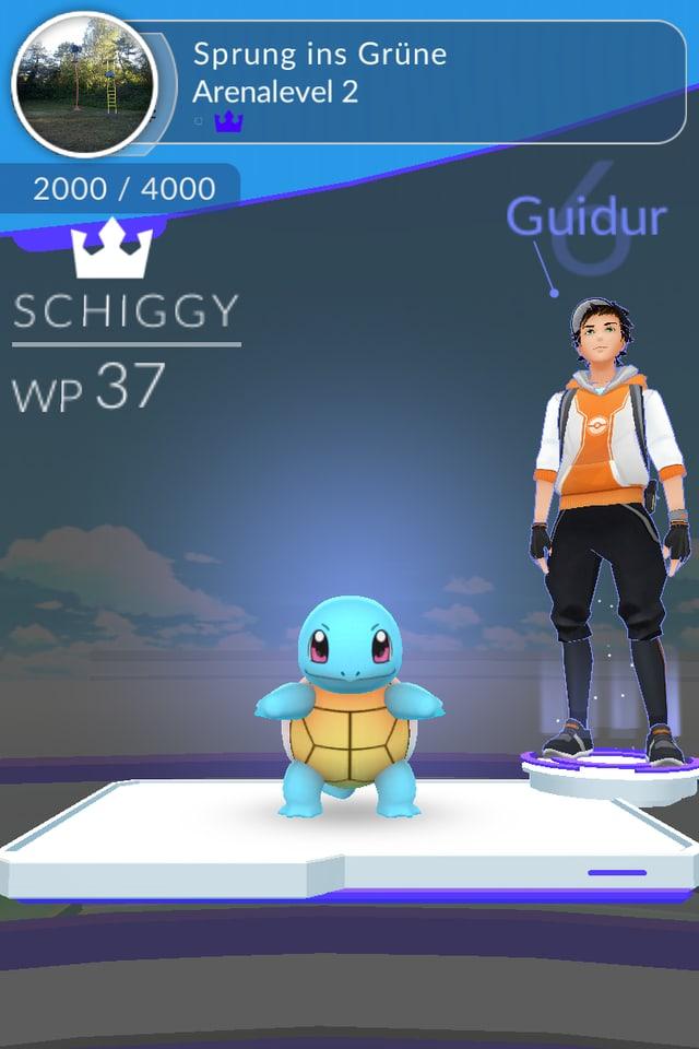 Blaue Schildkröte und ihr Trainer in der Arena.