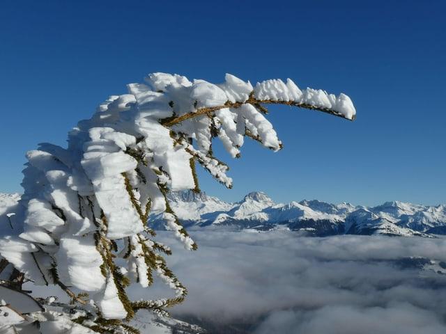 Eis am Baum
