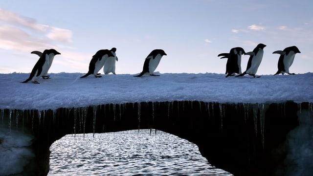 Pinguine gehen über eine Brücke aus Eis