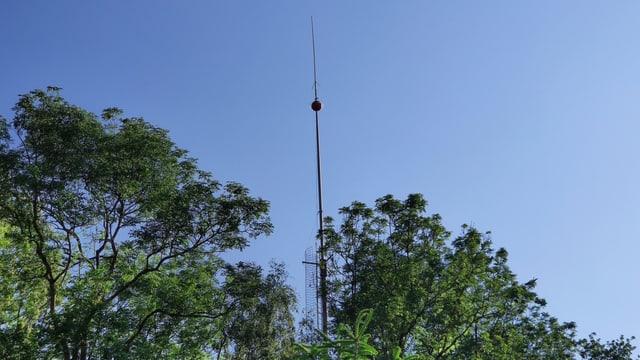 Schmaler Turm zwischen Bäumen
