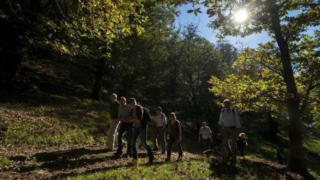eine Gruppe von Menschen läuft im Kastanienwald