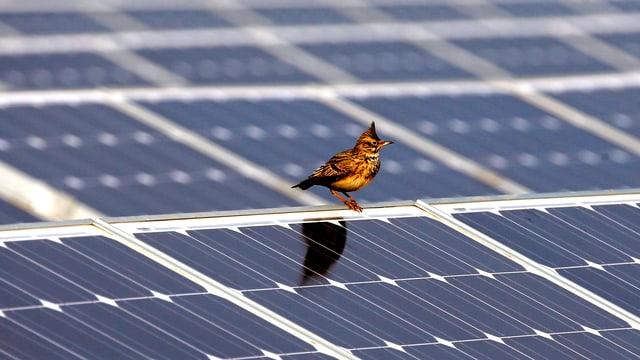 Grosses Solar-Panel mit einem einzelnen Zugvogel, der darauf sitzt.