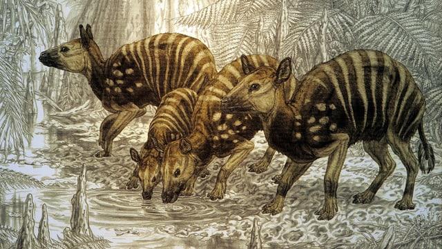 Zeichnung von Urpferden