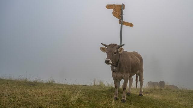 Eine Kuh steht in der Napfregion im dichten Nebel.