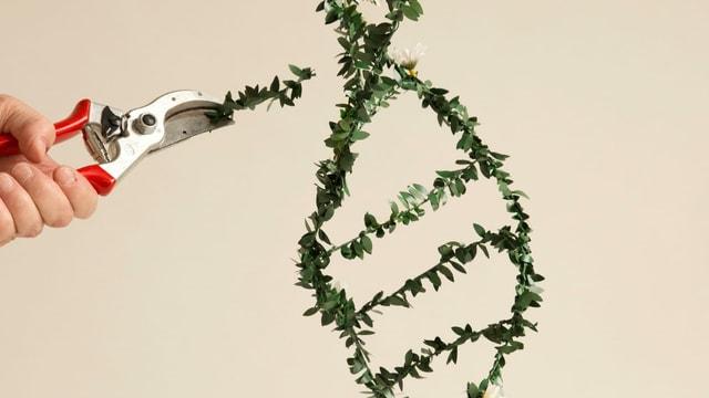 Heckenschere an DNA-Strang