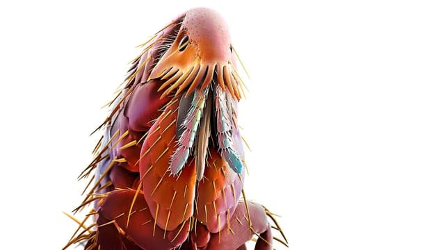 Mikroskop-Nahaufnahme eines Flohs