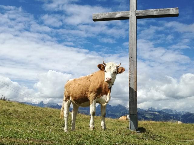 Kuh neben Holzkreuz