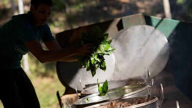 Zubereitung von Ayahuasca