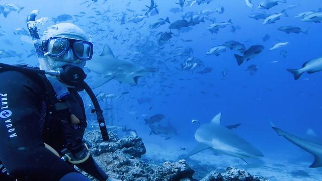 Korrespondent mit Hai im Hintergrund