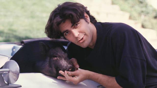 George Clooney lässt sich neben seinem Hängebauchschwein, das in einem Auto sitzt, ablichten. Damals hatte der Star noch dunkelbraune Haare.