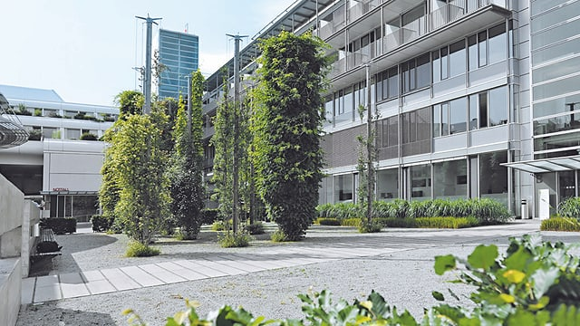 Aufnahme der Klinik von aussen, es ist ein Glas-Stahl-Gebäude. Auf dem Vorplatz stehen mehrere Bäume.