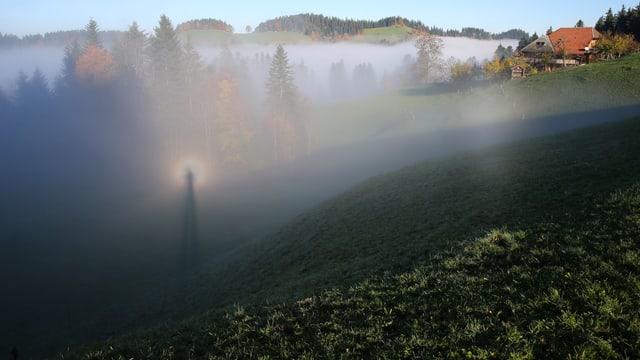 Blick auf eine Nebelschicht. An deren Obergrenze ist auch ein Brockengespenst zu sehen.