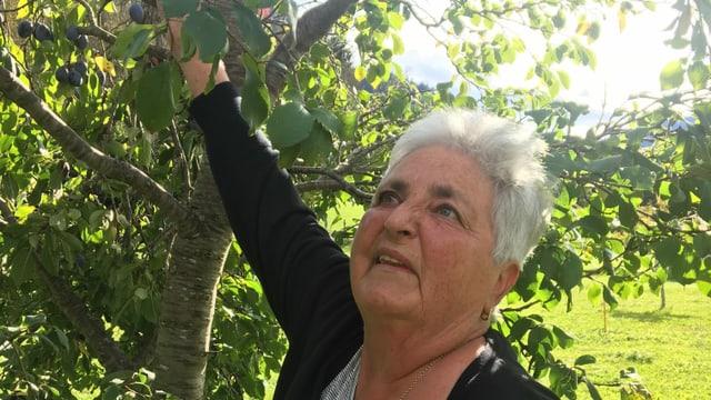 Ursula Bandli Caviezel en ses curtin da pumma a Castrisch.