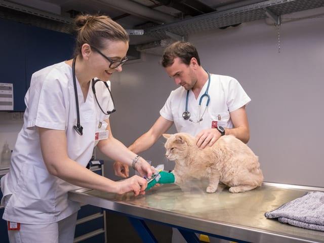 Zwei Ärzte kümmern sich um einen Kater.