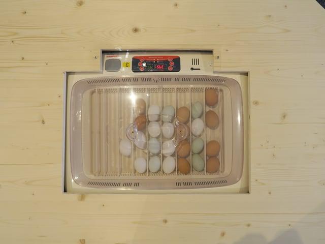 Eier in einem Brutkasten
