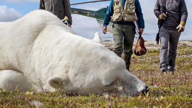 Video «Überlebenskampf Wildnis – Retter der Raubtiere (7/7)» abspielen