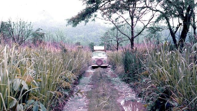 Ein VW-Bus in der indischen Wildnis.