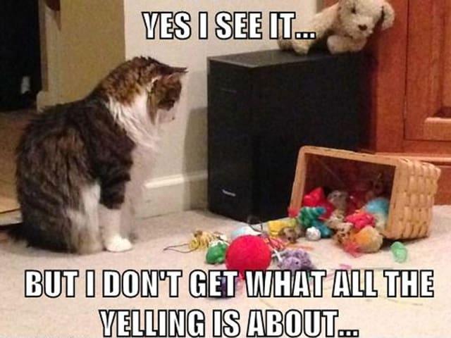 Auf diesem Macro Image kommentiert die Katze das von ihre verursachte Chaos: «Ja, ich sehe es. Aber ich verstehe nicht, was die ganze Schreierei soll.»