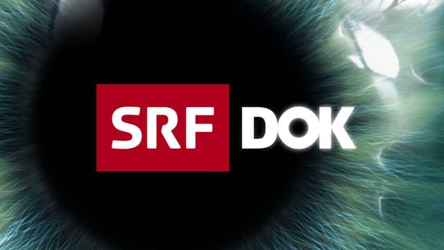 «DOK» am Mittwoch
