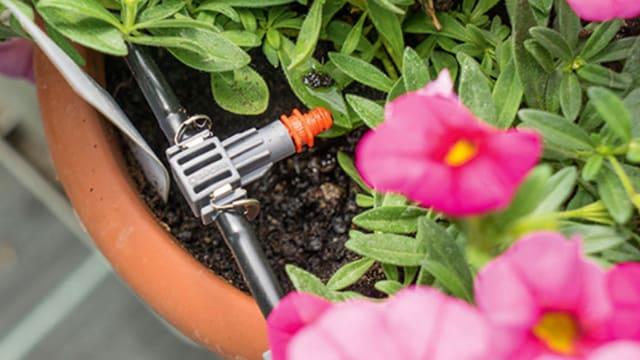Bewässerungssystem in Blumentopf.