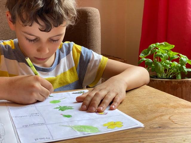 Junge malt Blumen und Blätter in sein Naturtagebuch.