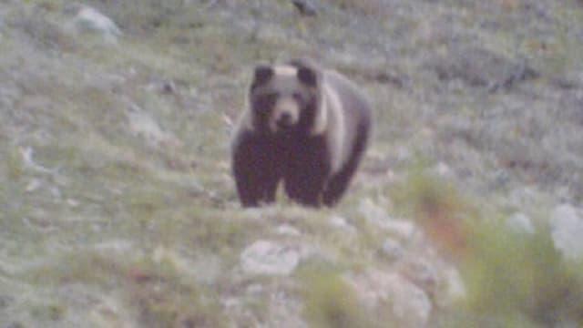 L'urs Lumpaz a Müstair.
