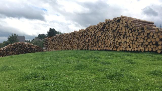 Stapelweise Baumstämme liegen geschichtet auf einem grossen Haufen auf einer grünen Wiese.