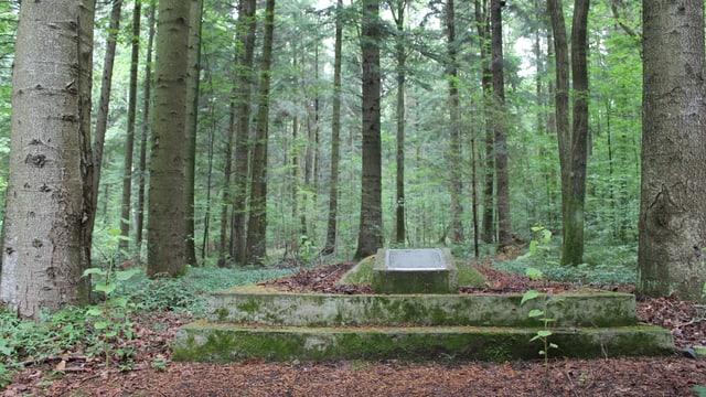 Ein jüdisches Massengrab in einem Wald.