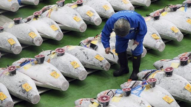 Thunfisch-Aktion in Tokio