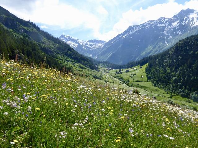 Blumenwiese auf einer Alp, der Himmel darüber ist leicht bewölkt