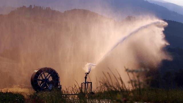 Bewässerung einer Wiese.