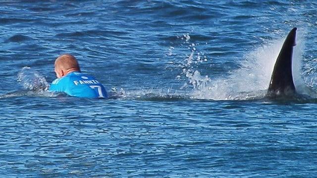 Hai greift Surfer an.