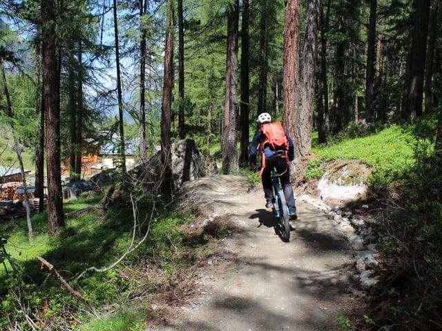 Ein Mountainbiker fährt durch den Wald.