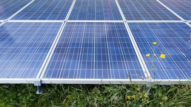 Eine Solarstromanlage auf einer Wiese