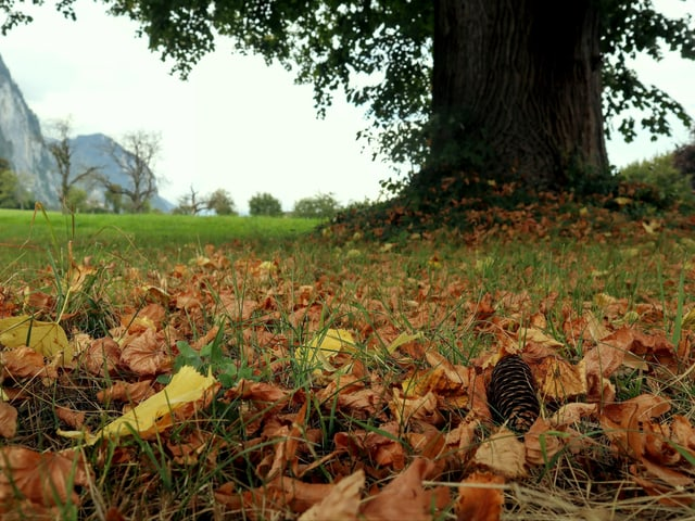 Herbstlaub am Boden.