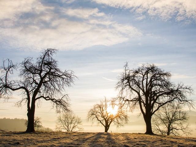 Winterlandschaft mit kargen Bäumen mit tief stehender Sonne in hellen blau-weiss und gelben Tönen