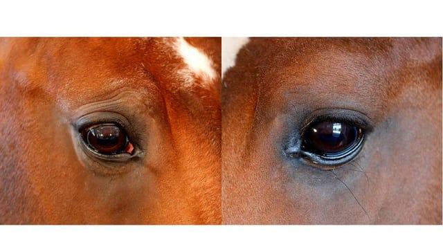 Augen von Pferden mit Sorgenfalten