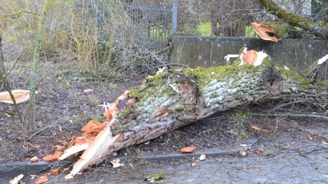 Im Berner Marzili-Quartier zerriss der Sturm einen alten Baum.