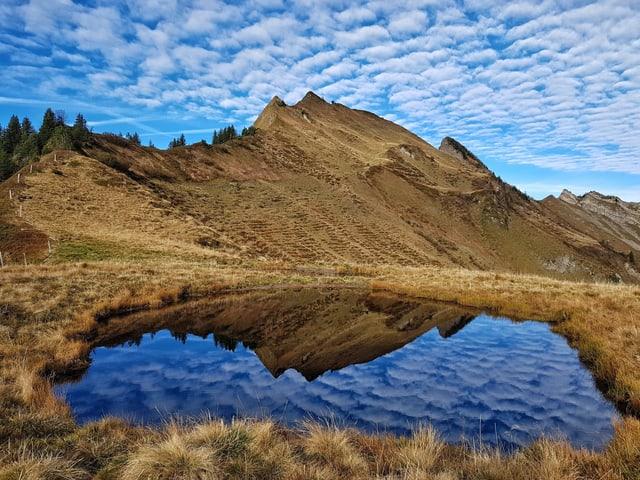 Kleiner See in dem sich die Landschaft spiegelt.
