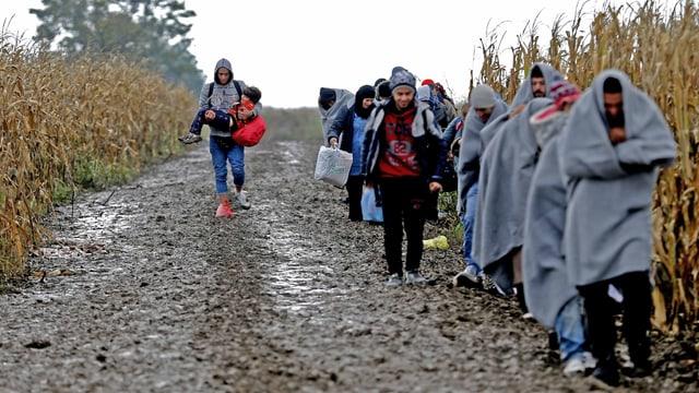 Die Flüchtlinge gehen auf einem Weg.