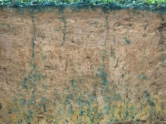 Querschnitt Boden mit wenig blauer Farbe, verdichteter Boden.