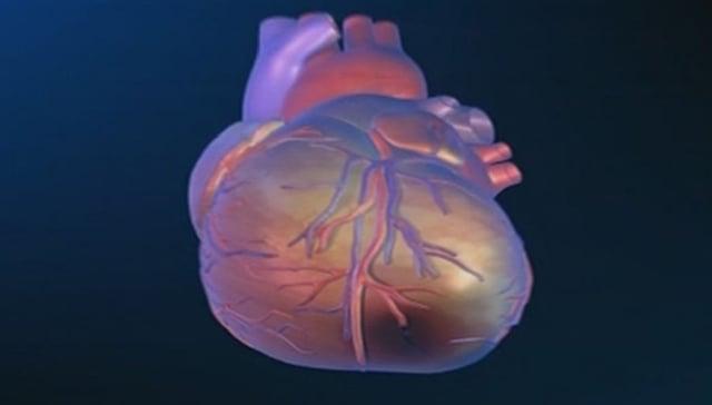 Illustraziun dal cor uman