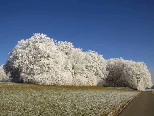 Weisser Wald