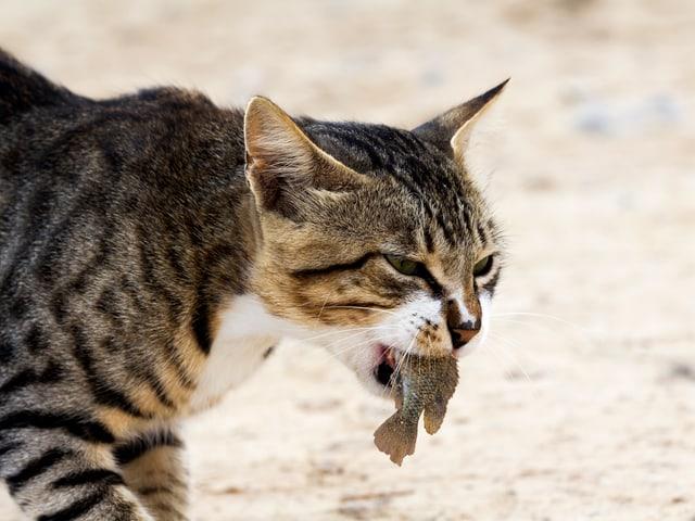 Eine Katze hat einen Fisch gefangen.