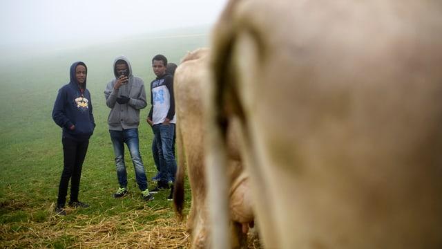 Asylbewerber aus Eritrea machen ein Foto von Kuehen, an der traditionellen Viehschau, am Mittwoch, 21. September 2016, in Trogen.