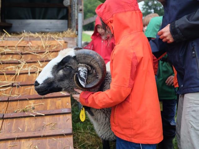 Ein Kind mit einem Schaf.