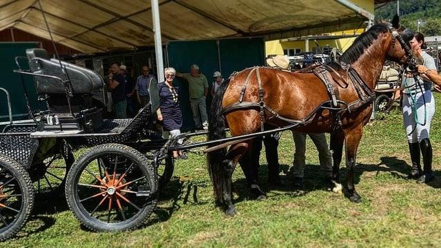2 Pferde vor einer Kutsche