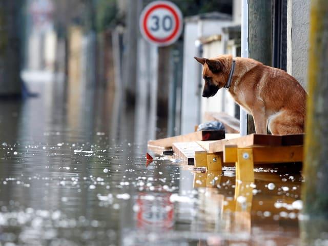 Hund schaut auf Wasser.