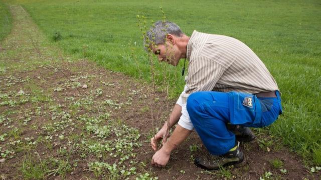 Ein Mann pflanzt etwas in die Erde.