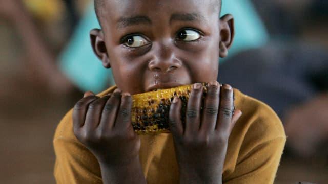 Ein Junge isst Mais